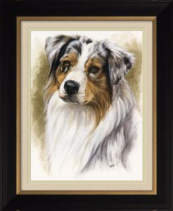 Australian Shepherd by Barbara Keith framed in Formal Black with Gold Accent and a double mat