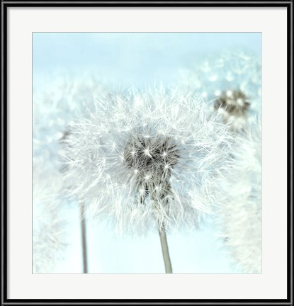 Dandelion_I _by_Kevin_Twomey