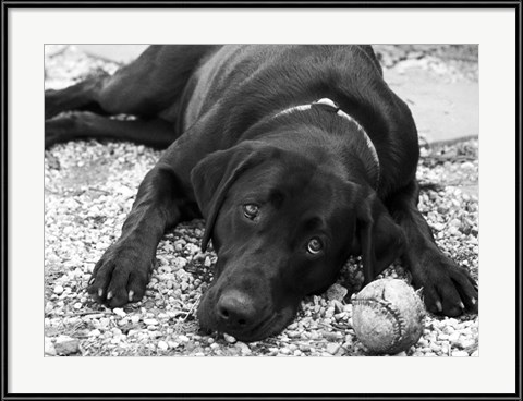 Playful by Rob Struck - pup with a baseball