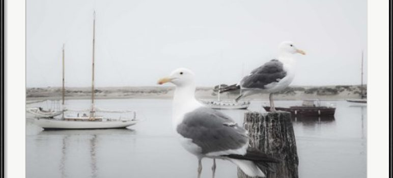 Cottage Art / Seagull Photo: Two Gulls and Boats by Moises Levy