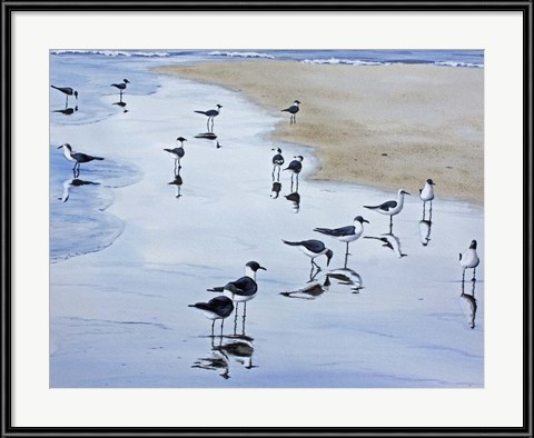 Seagull Art: Many Birds by Patrick Sullivan