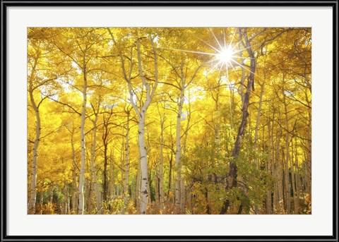 Aspen Morning by Darren White