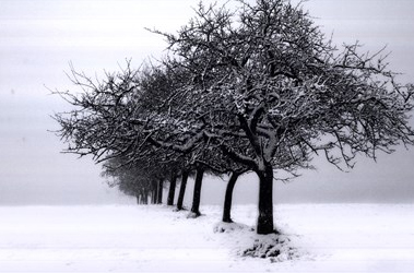 Winter Tree Line I by Ilona Wellmann