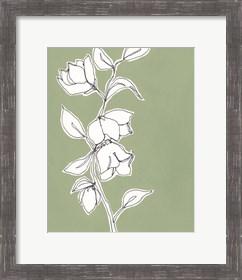 Framed Botanic Drawing II