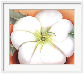 Framed White Flower on Red Earth, No. 1