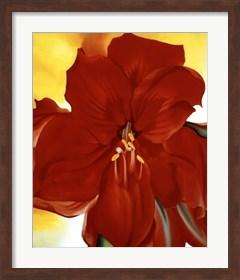 Framed Red Amaryllis, 1937