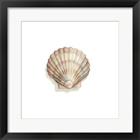 Framed Shell Collection I (A)