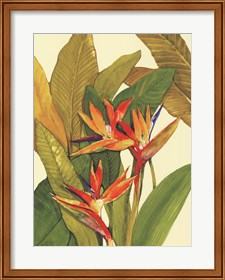 Framed Tropical Bird of Paradise