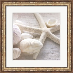 Framed Driftwood Shells III