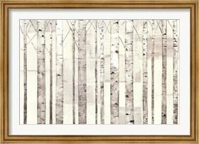 Framed Birch Trees on White