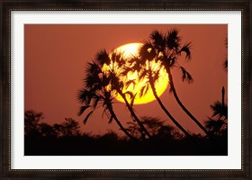 Framed Sunrise behind silhouetted trees, Kenya, Africa