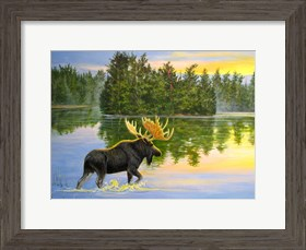Framed Wilderness Lake Moose