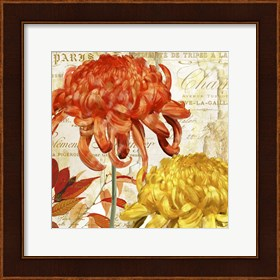 Framed Chrysanthemes I