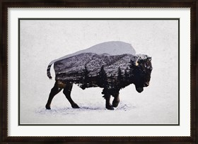 Framed American Bison