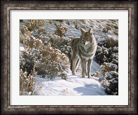 Framed Winter Sage- Coyote