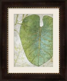 Framed Frond IV