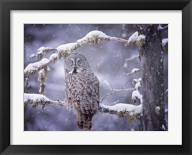 Framed Owl in the Snow III