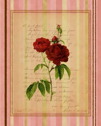 Framed Botanical Rose III Print