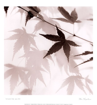 Framed Japanese Maple Leaves No. 2 Print