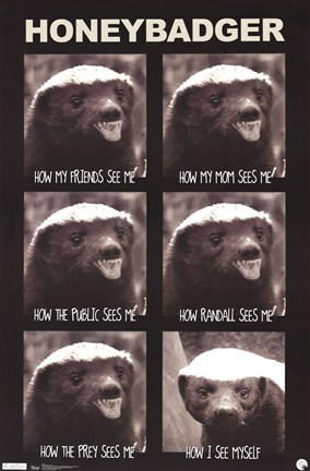 Framed Honey Badger - See Me Print