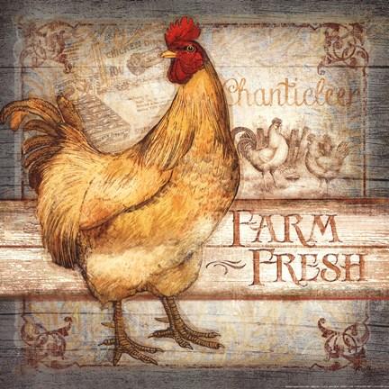 Farm Fresh Rooster Artwork By Mollie B At Framedart Com