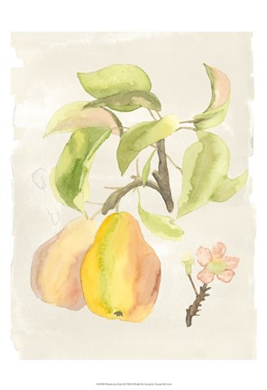Framed Watercolor Fruit III Print