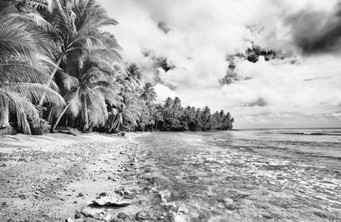 Tropical Beach D Art by Skip Nall at FramedArt.com
