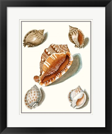 Framed Collected Shells VII Print