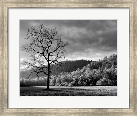 Framed Storm Clearing At Dawn In Cataloochee Valley, North Carolina (BW) Print