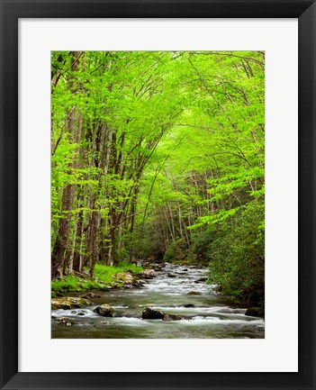 Framed Straight Fork River, North Carolina Print