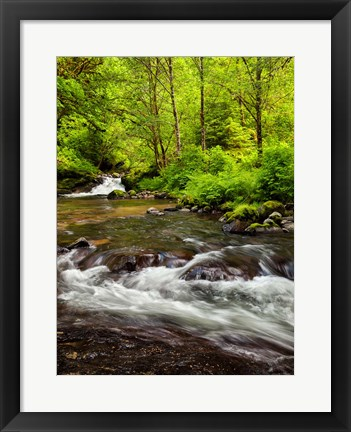 Framed Siuslaw National Forest, Sweet Creek, Oregon Print