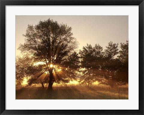 Framed Sunrise Through Fog And Trees At Cades Cove Print