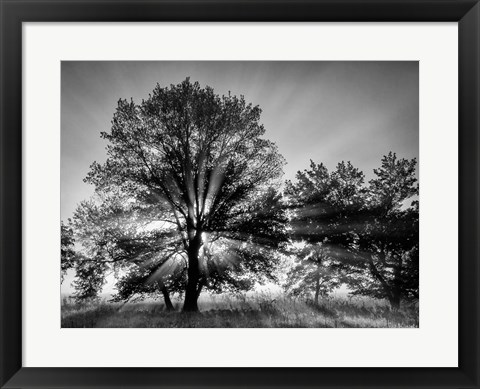 Framed Sunrise Through Fog And Trees At Cades Cove (BW) Print