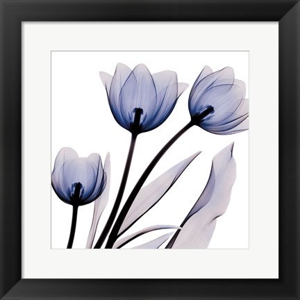 Framed Brilliant Night Tulips C68 Print