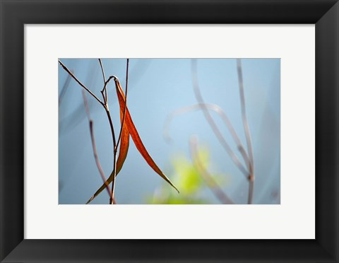 Framed Red and Green by the River Print