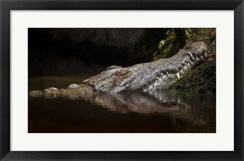 Framed Crocodile Smile Print
