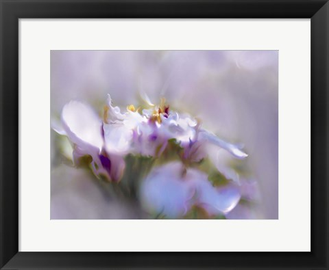 Framed Mist of Lilac III Print