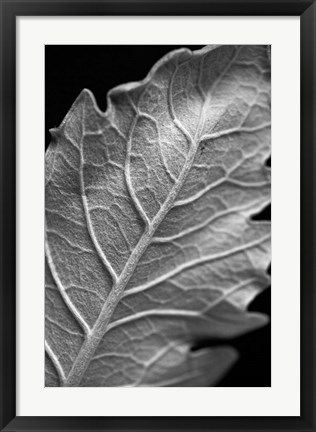 Framed Striking Leaf I Print