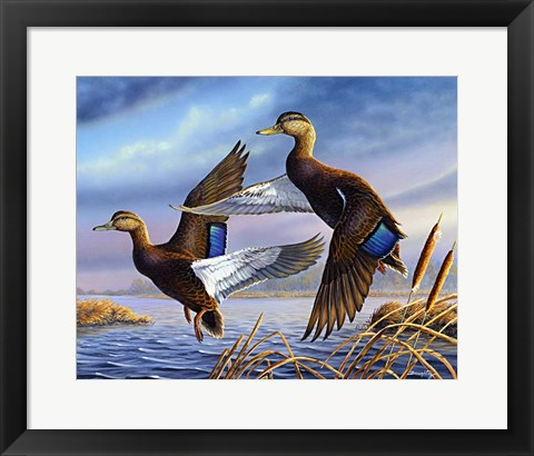 Framed Black Mallards Print