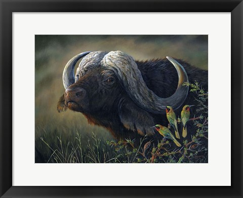 Framed Caped Buffalo Print