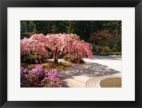 Framed Cherry Tree Blossoms Over A Rock Garden In The Japanese Gardens In Portland's Washington Park, Oregon Print