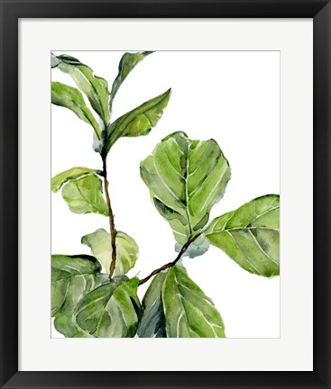 Framed Fiddle Fig II Print