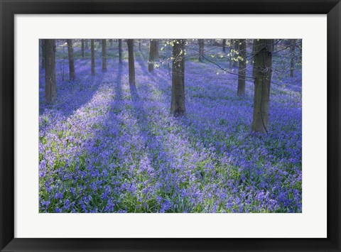 Framed Bluebell Dreams II Print