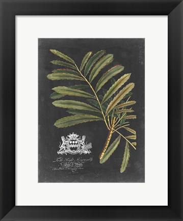 Framed Royal Foliage II Print