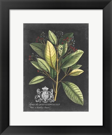Framed Royal Foliage IV Print