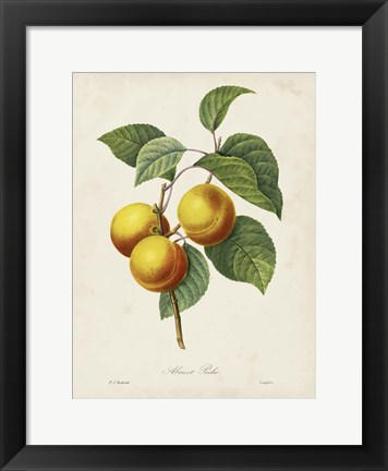 Framed Redoute's Fruit I Print
