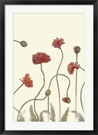 Framed Coral Poppy Display III Print
