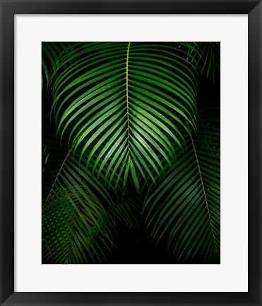 Framed Tropical IV Print