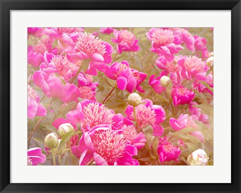Framed Pinks Print