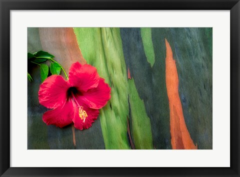 Framed Hibiscus Print